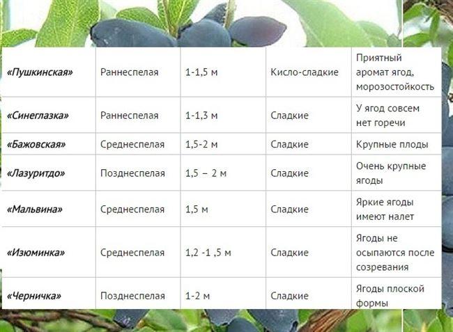 Внешний вид, характеристики ягод, время созревания, урожайность