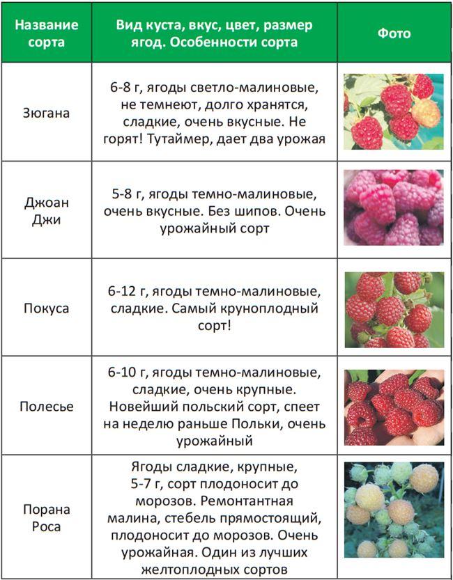 Болезни малины, таблица