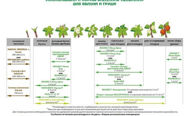 Чем и как правильно подкормить груши весной, сроки внесения удобрений