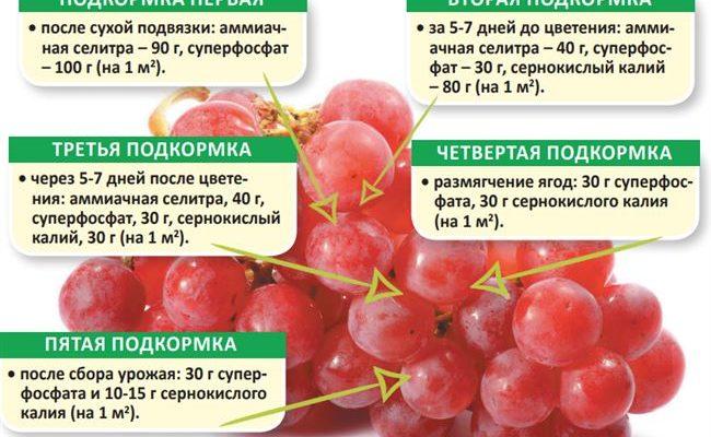 Чем подкормить сливу летом, правила и сроки внесения удобрений