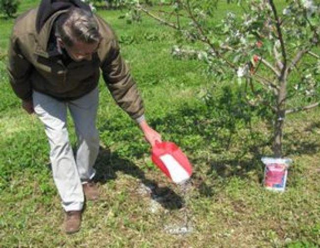Для чего необходимо подкармливать дерево