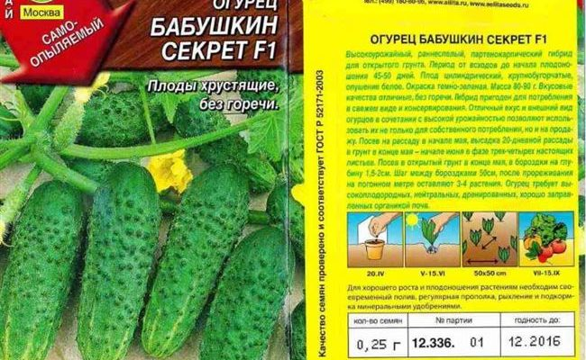 Достоинства и особенности гибрида огурцов «Бабушкин секрет f1»