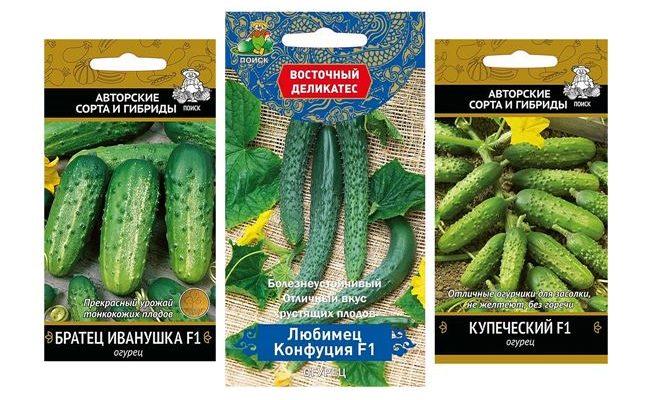 Фаворит многих садоводов и дачников — огурец Любимчик: описание и характеристика сорта