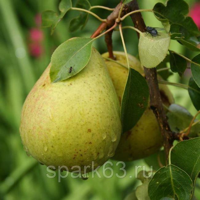 Фотогалерея: характерные для дерева заболевания