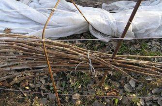 Как подготовить малину к зиме – секреты опытных садоводов