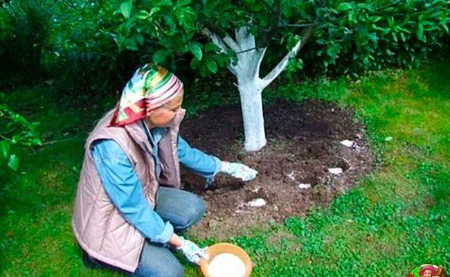 Как подкармливать молодую яблоню