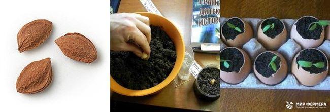 Как правильно прорастить семя