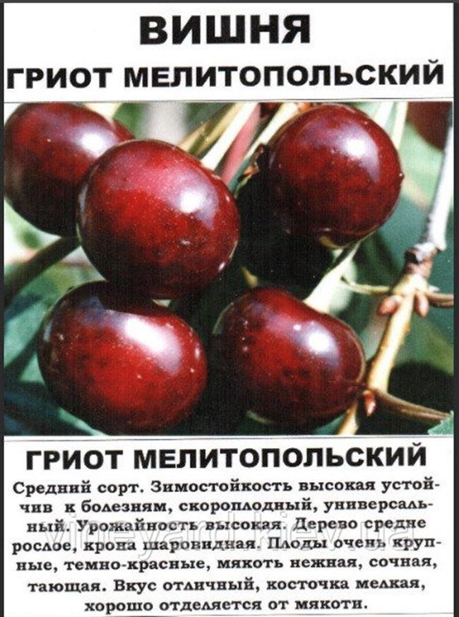Характеристики и описание вишни сорта Гриот Московский, посадка и уход