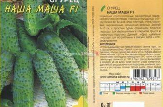Машенька — вкусный, урожайный, неприхотливый гибрид огурцов