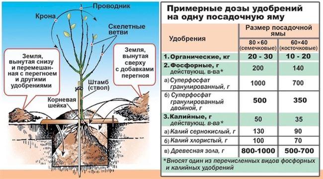Нюансы питания деревьев в период завязи и плодоношения