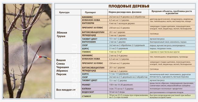 Обработка груши от болезней и вредителей (сроки и препараты)