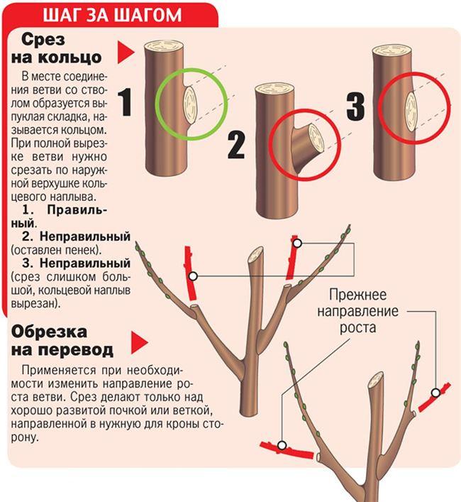 Обрезка подмёрзших деревьев