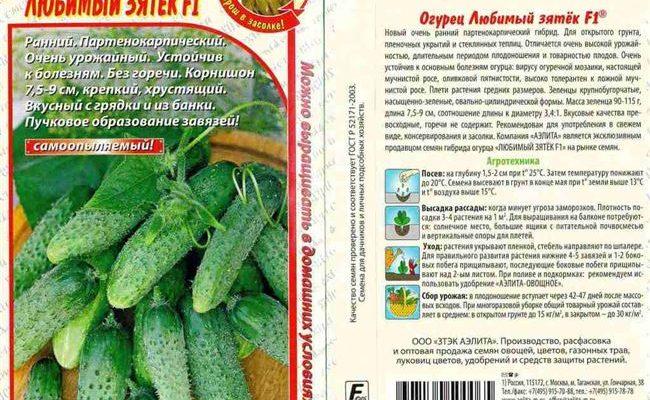 Огурец Зятек F1: характеристика, правила выращивания, советы огородников