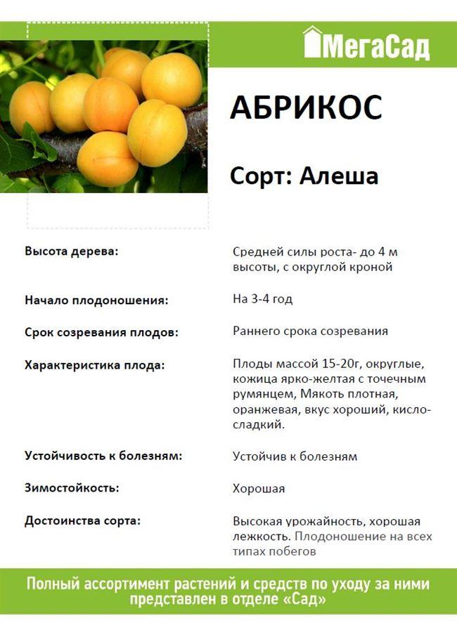 Описание и характеристика плодов и дерева