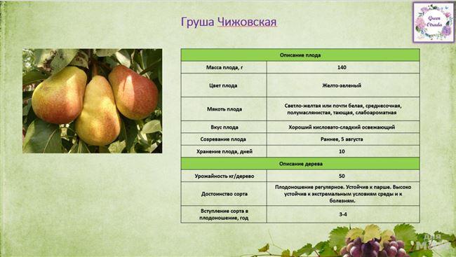 Описание плода