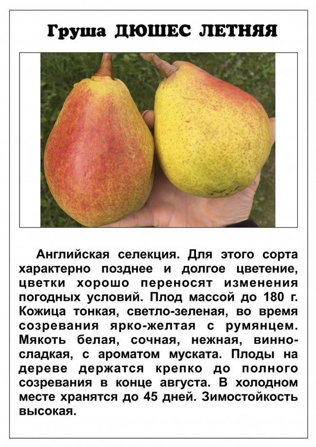 Описание растения и его характеристика