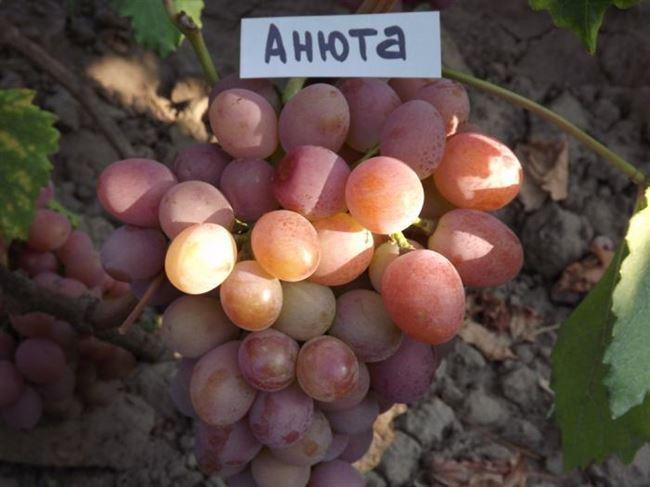 Описание растения и специфика выращивания