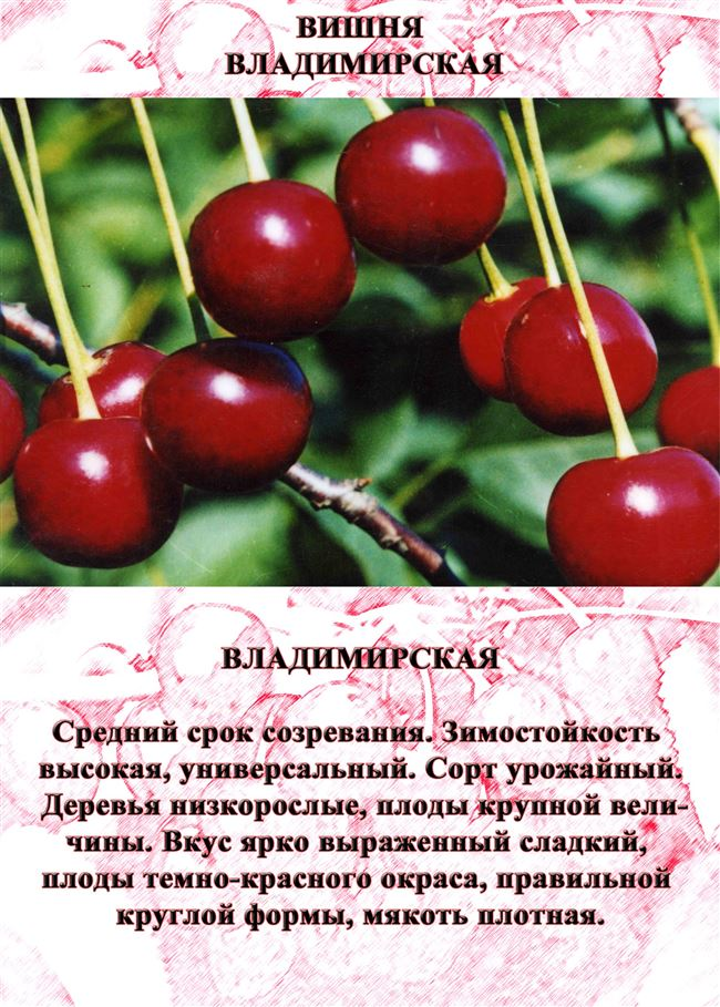Описание сорта и характеристика ягод