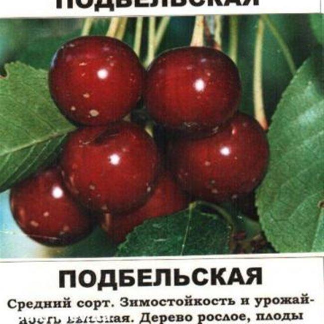 Описание вишни Подбельская