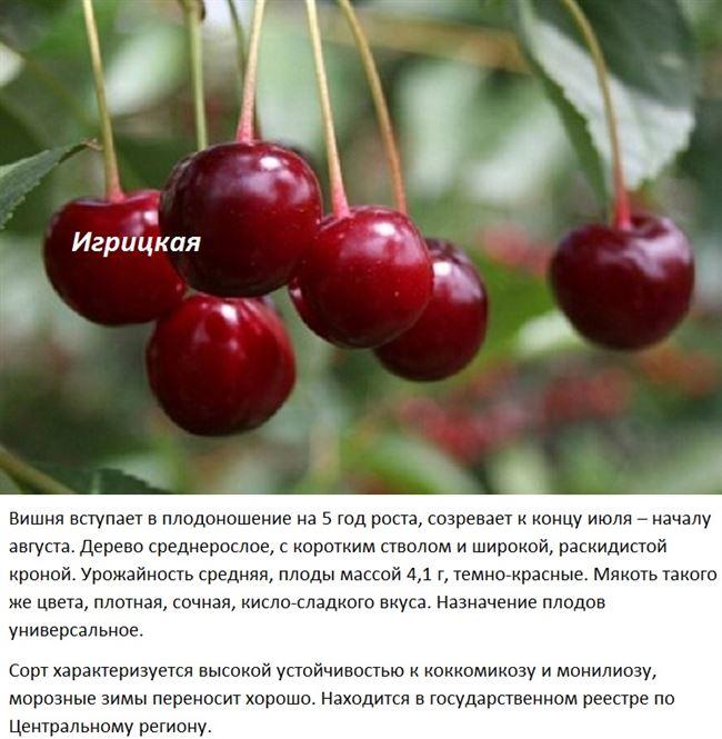 Опылители для вишни Игрицкая