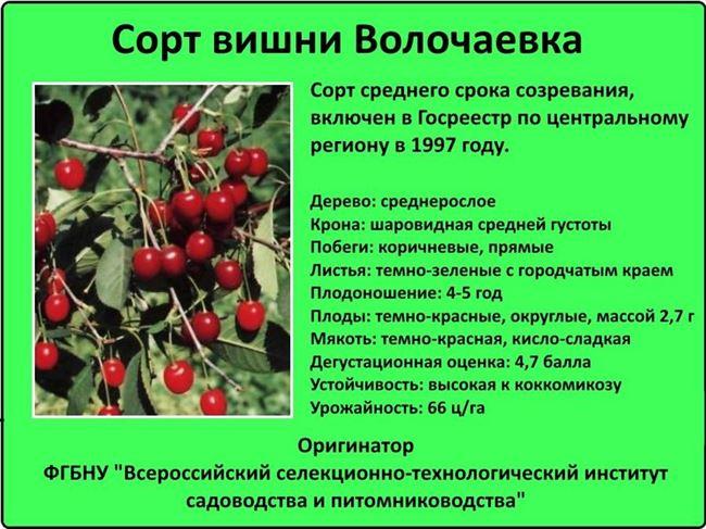 Опытные садоводы рекомендуют