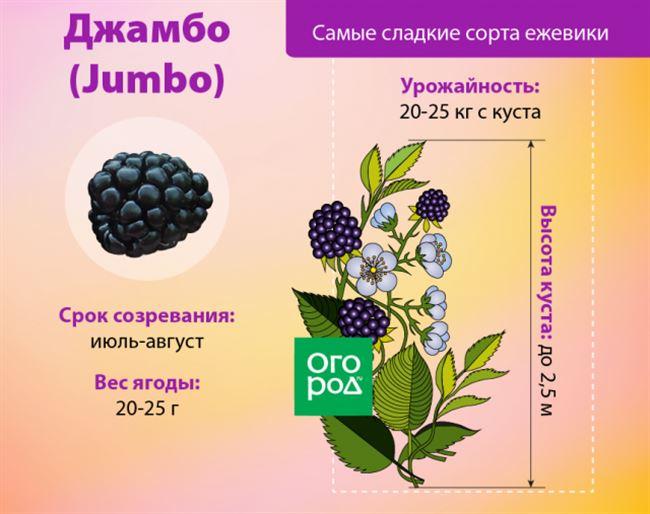 Основные мероприятия по уходу за растением