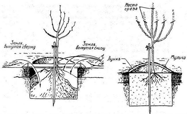 Особенности посадки в заморозки