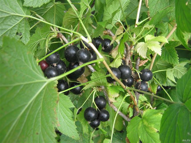 Отзывы садоводов и дачников