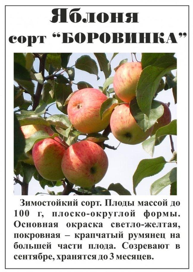 Потребительские качества плодов