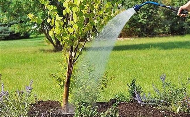 Правильный полив яблонь. Информация от профессиональных агрономов