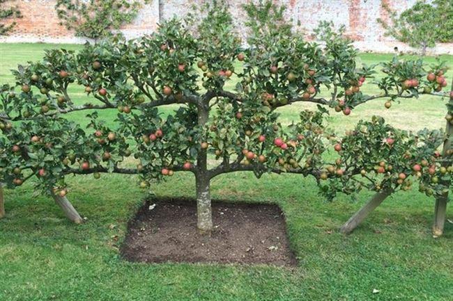 Придание формы кроне деревьев