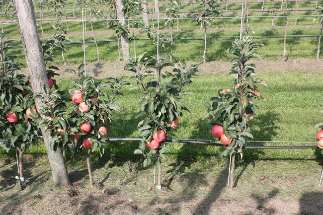 Принцип органического земледелия
