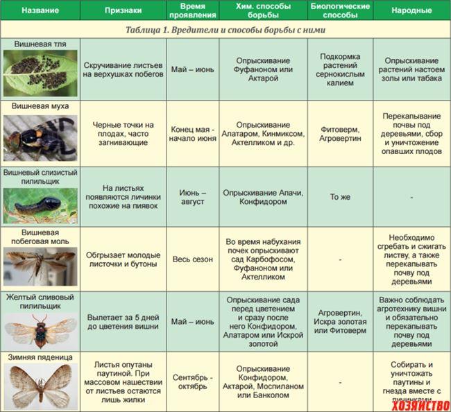 Профилактика и борьба с насекомыми-вредителями– таблица