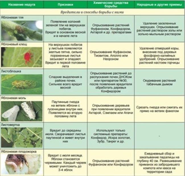 Профилактика распространения вредителей в саду