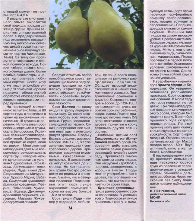 Размножение карликовых груш