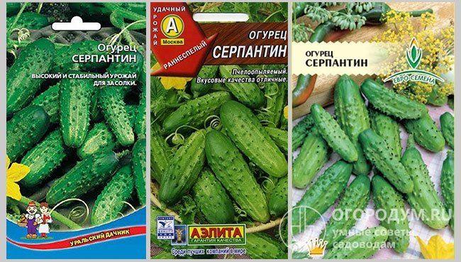Рекордные урожаи в начале лета — огурец Серпантин: отзывы, советы по выращиванию и описание