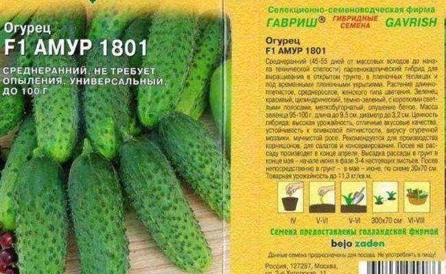 Самый урожайный огурец Алфавит f1 для ленивых: описание сорта, фото