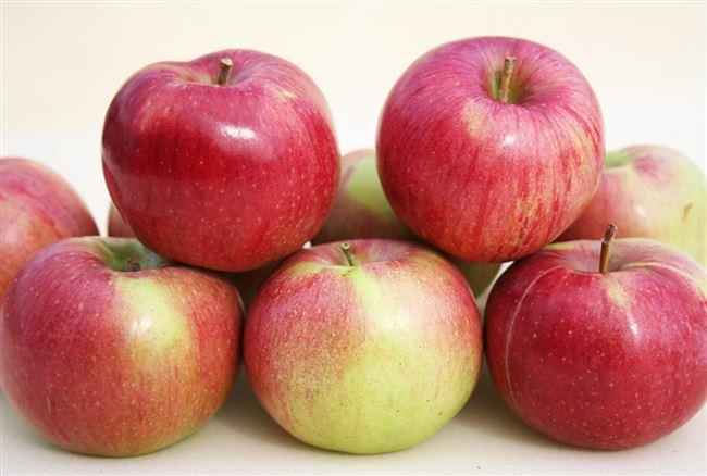 Сорт яблок Анис Полосатый