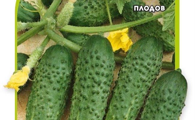 Сорт огурцов Туми F1: описание, выращивание и уход