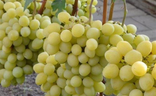 Сорт винограда Валёк: всепогодный суперранний сорт даже для неблагоприятных климатических условий