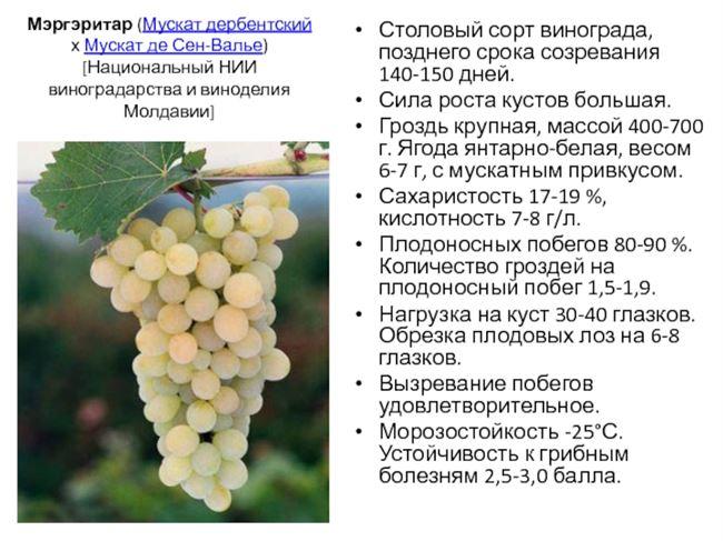Сравнительная характеристика сортов мускатного винограда