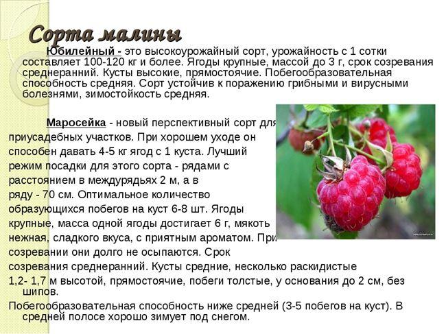 Таблица: болезни, характерные для малины Таруса