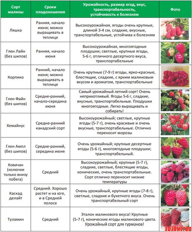 Таблица: болезни, характерные для сорта