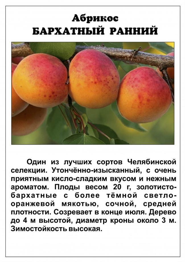 Таблица: чем может заболеть абрикос