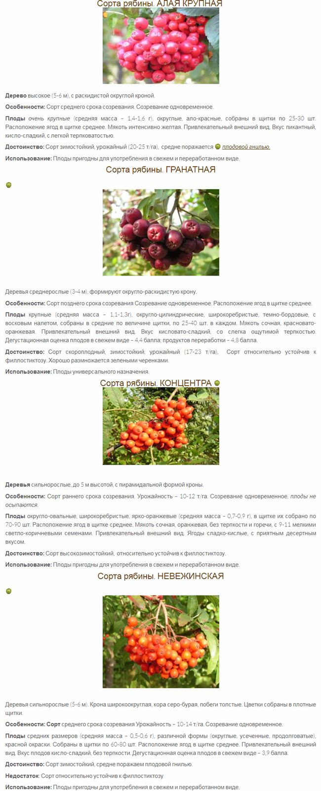 Таблица: состав и энергетическая ценность ягод рябины красной