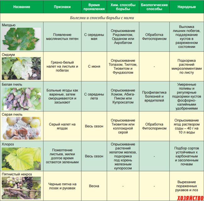Таблица: вредители винограда