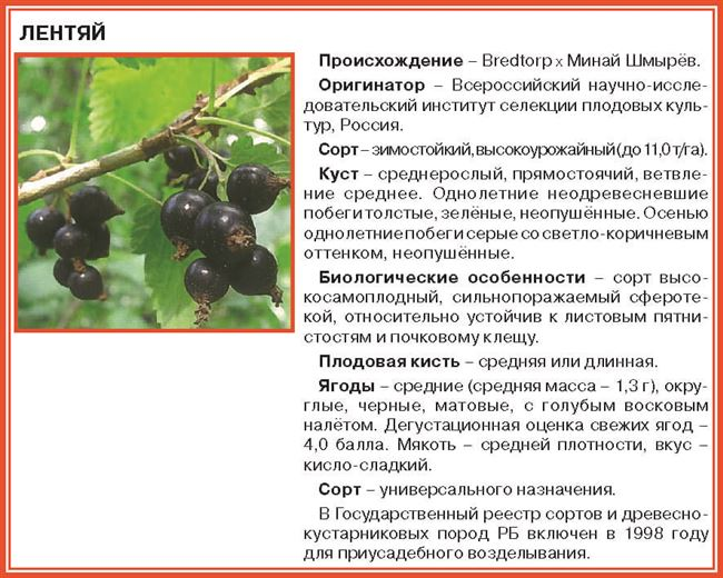 Цветение, урожайность и ягоды