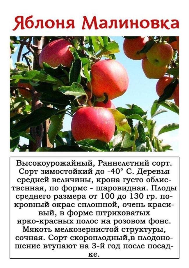 Уборка и хранение плодов