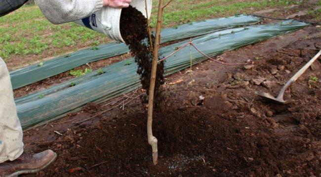Удобрения для посадочной ямы под яблоню