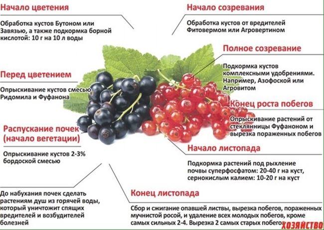 Удобрения во время вегетации